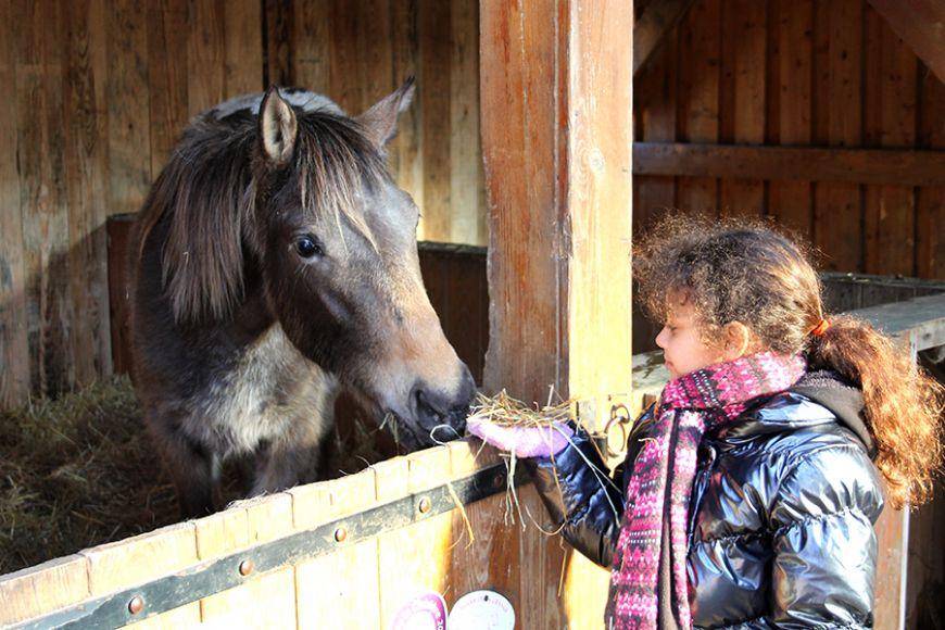 site de rencontre poney
